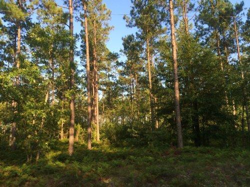 Dan Pridgen Tract : Currie : Pender County : North Carolina