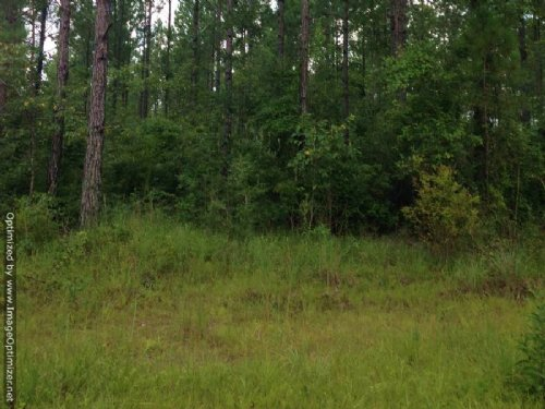 122± Ac Hunting & Timberland : Poplarville : Pearl River County : Mississippi