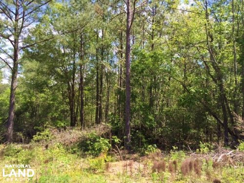 Hwy 34 Rec/Hunting Tract : Clanton : Chilton County : Alabama