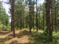 Crawford Marshall Tract : Kelly : Bladen County : North Carolina