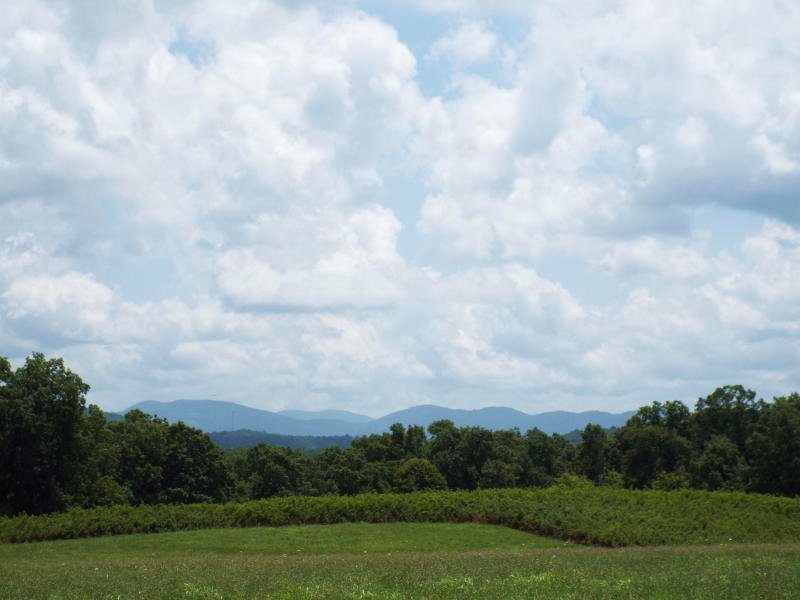 202 Acres Of Pastures And Woods : Sunbright : Morgan County : Tennessee