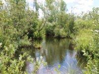66 Acres Near Salmon River & Trails
