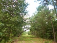 12.34 Acres Hunting Land, Timber
