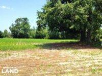 5 Acre Loris Mini-farm