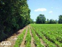 6 Acre Loris Mini-farm