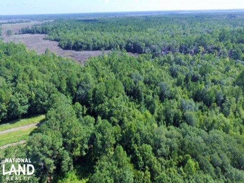 Camden Hunting Tract : Waverly : Camden County : Georgia