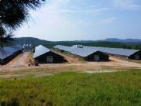 4 Mega House Poultry Farm 175+/- Ac