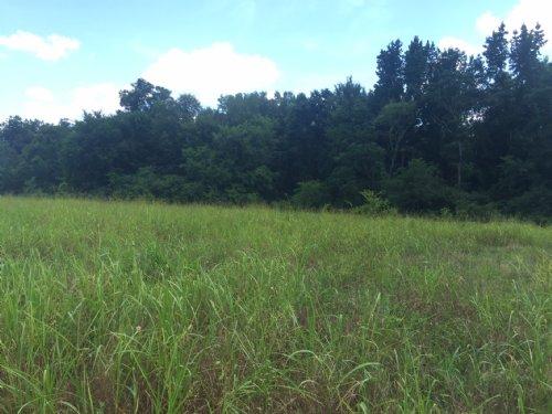 63 Acres : Trenton : Edgefield County : South Carolina