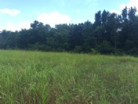 63 Acres : Trenton : Edgefield County : South Carolina