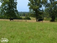 155+/- Acre Cattle & Hay Farm