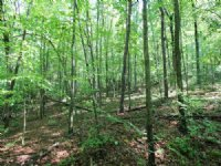 480± Acres Land, Marketable Timber