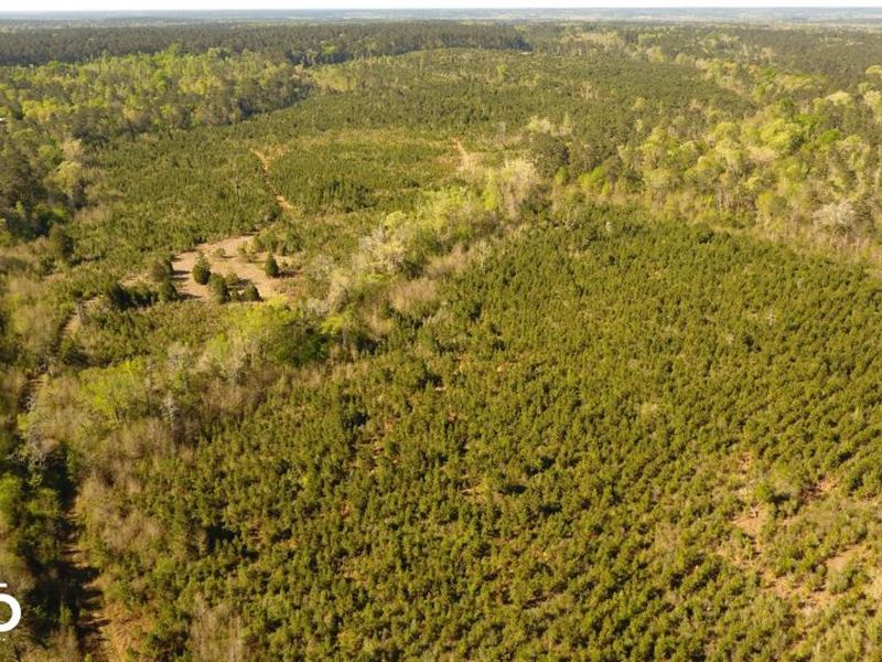Sam Houston Forest Recreational/Dev : Coldspring : San Jacinto County : Texas