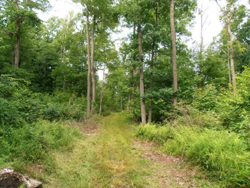 178 +/- Acres Land, Wildlife : Jersey Shore : Lycoming County : Pennsylvania