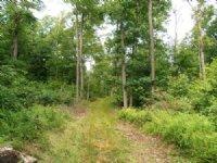 178 +/- Acres Land, Wildlife