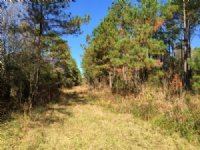 207 Acre Hunting Paradise : Nahunta : Brantley County : Georgia