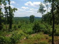 166+/- Ac Mountain View Timberland