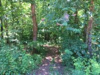 10.459 +/- Wooded Acres, Bank Owned