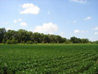 Land Auction - 723 Acres In 5 Tract