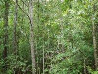 Buckhead Trail