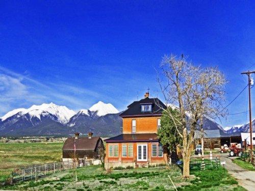 234307 - A Perfect Colorado Horse P : Nathrop : Chaffee County : Colorado