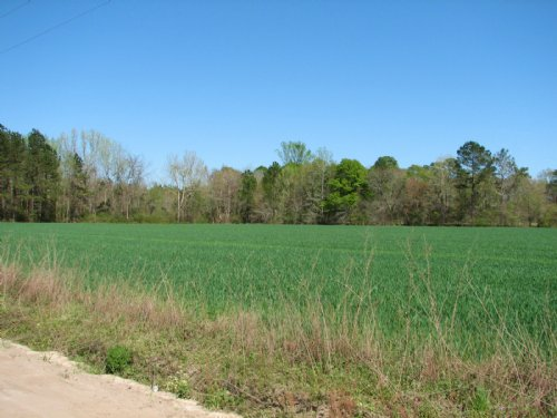 18 Acres +/- Bulloch County : Brooklet : Bulloch County : Georgia