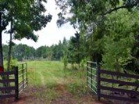 Big Tom Woods : Lumpkin : Stewart County : Georgia