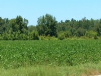 56 Ac Farm Hwy 41 Hemingway : Hemingway : Williamsburg County : South Carolina