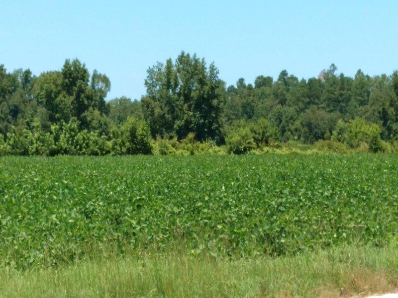 56 Ac Farm Hwy 41 Hemingway : Hemingway : Williamsburg County : South Carolina