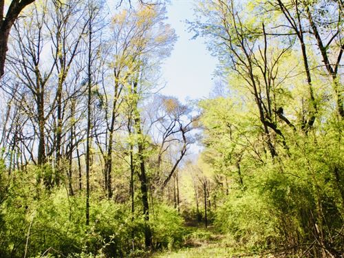40 Acres Of Mature Timber In Jayess : Jayess : Lawrence County : Mississippi