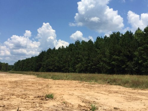 10 Ac Thomas Windt Rd. : Shepherd : San Jacinto County : Texas