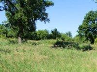 11+ Ac W/ Mature Trees & Ridge