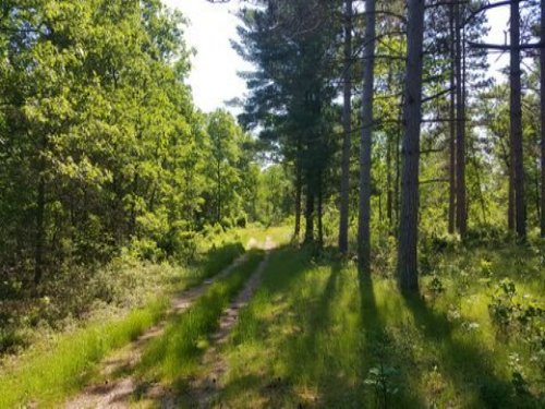 200 Ac Outstanding Hunting Land : Coloma : Adams County : Wisconsin