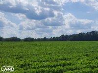 Wallace Prime Productive Farmland