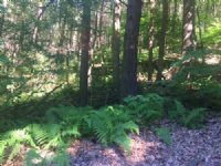 12 Acres Land For Hunting