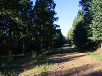 320+/- Acres Vacant Land Approx