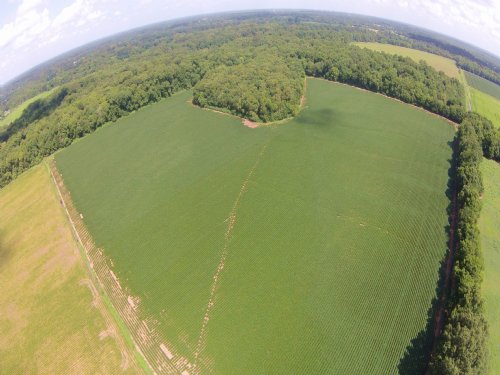 40+/- Acres : Mansura : Avoyelles Parish : Louisiana