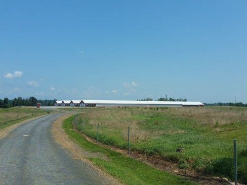 4 House Poultry Farm & Cattle Farm : Albertville : Marshall County : Alabama