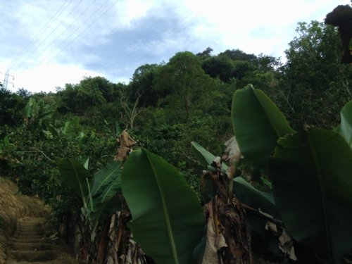 6Ac Minifarm, Spring, Orch, Cabin : Orosi : Costa Rica