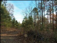 Large Recreational Tract : Ranger : Gordon County : Georgia