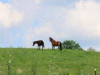 40 Acre Equestrian Center