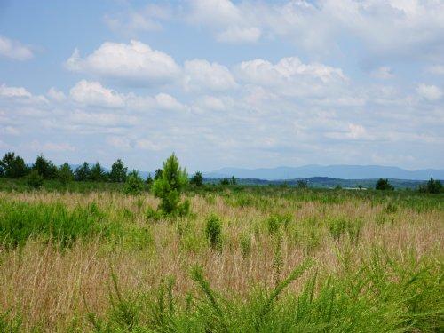 5.82 Acres Near Ellijay : Ellijay : Gilmer County : Georgia