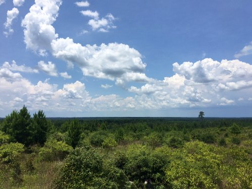 1185 Acres I-45 N Service Road : Huntsville : Walker County : Texas