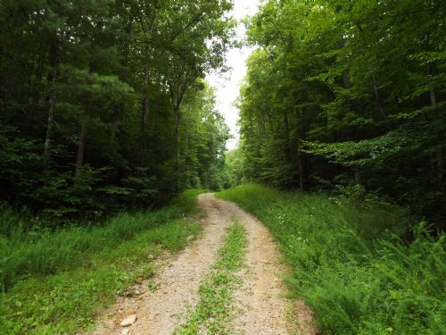 Bear Branch 41+ Acres : Wartburg : Morgan County : Tennessee