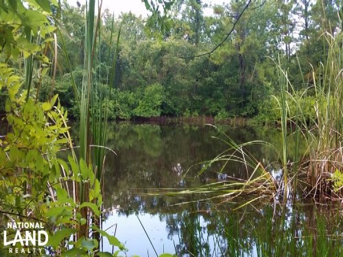 71 Acre Country Getaway : New Waverly : Walker County : Texas