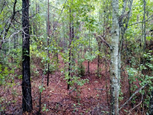 110 Acre Hunters Paradise : Knoxville : Crawford County : Georgia