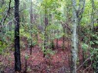110 Acre Hunters Paradise