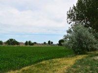 Hinebauch Farm