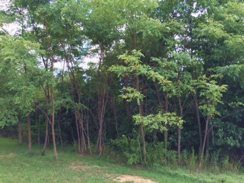 10.63+/- Acres Adjacent To State Pk : South Pittsburg : Marion County : Tennessee