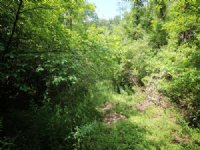 68+/- Acres Land, Excellent Hunting