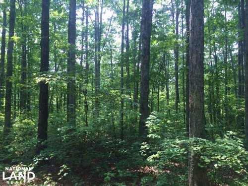 13.5 Acres of Timberland & Home Sit : Dennard : Van Buren County : Arkansas